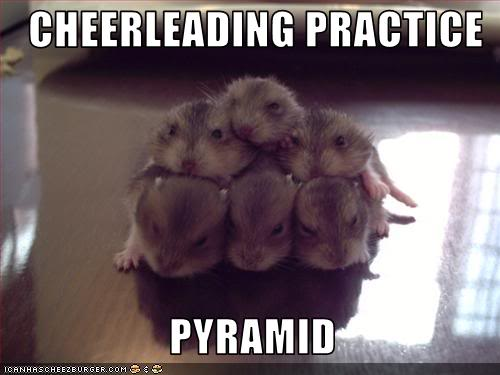 funny-pictures-hamsters-have-cheerl.jpg